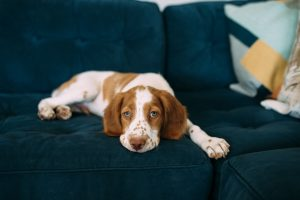 Selling Your Home with Dogs: #OfferpadPets
